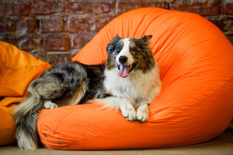 Íme, 3+1 egyszerűen elkészíthető DIY kutyafekhely
