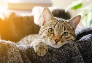 Ilyen cicaházakat még nem láttál! - Elkényeztetett macskák csodaszép otthonai