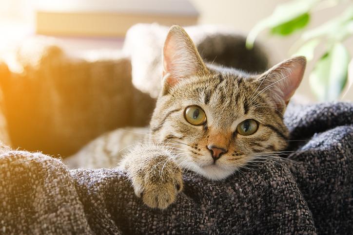 Ilyen cicaházakat még nem láttál! – Elkényeztetett macskák csodaszép otthonai