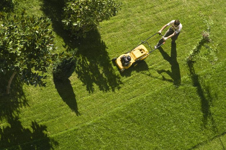 Gyepgondozás nyáron – 3 tipp, hogy a gyeped zöldebb legyen a szomszédénál