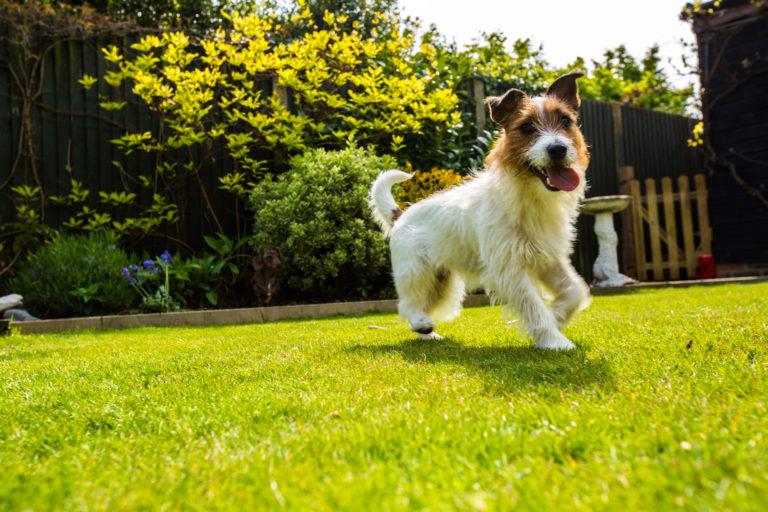 5 tipp, hogy megőrizd a kerted szépségét kutya mellett