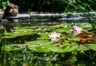 kerti tó ötletek