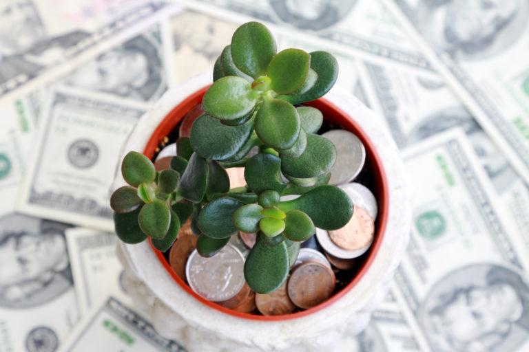 Gazdag szeretnél lenni? – Akkor nevelgess kínai pénzfát