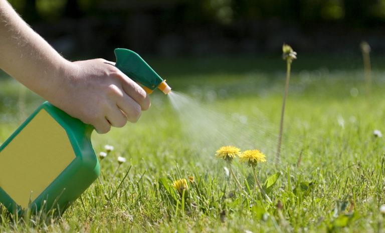 Ezzel a konyhai csodaszerrel könnyedén megszabadulhatsz a gyomnövényektől a kertben