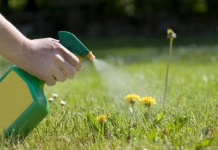 5 vegyszermentes házi praktika a gaz kiirtására