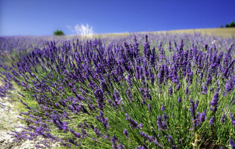 Sziklakerti növények – Ezek a legmutatósabbak fajták, melyekkel könnyen boldogulsz majd