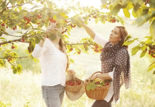 Gyümölcsfák kezdő kertészeknek – Ezek még a te kertedben is hoznak termést