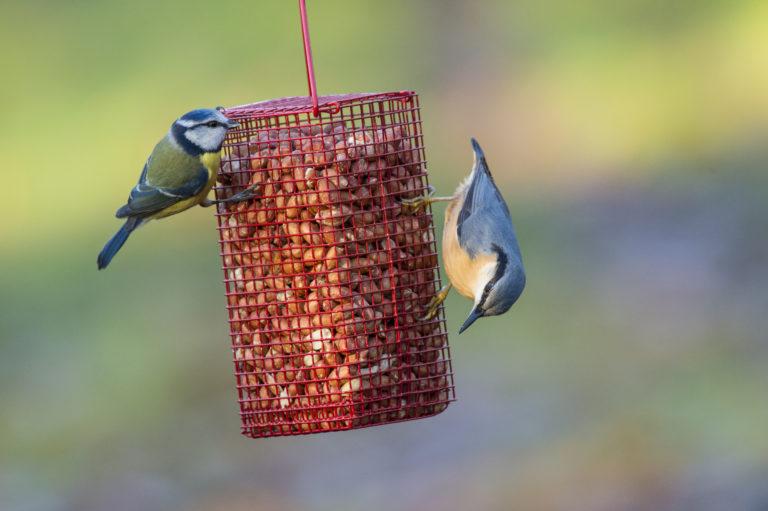 3 könnyen elkészíthető DIY madáretető, mely kedves kis vendégeket csalogat majd a kertedbe