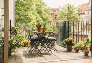 Zöld oázis az erkélyen - 3 tipp, hogy sokáig szépek maradjanak a növényeid