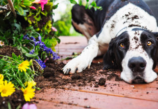 5 tipp, hogy biztonságban tudhasd veteményesedet ház körüli állatoktól