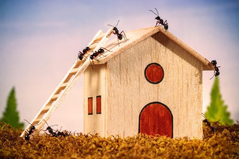 6 vegyszermentes otthoni praktika hangyák ellen