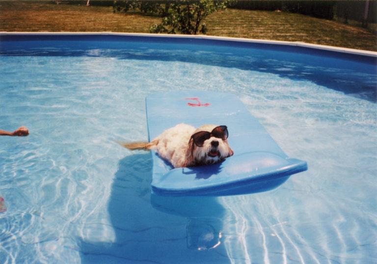 5 tipp, hogy tudod a kutyád számára elviselhetőbbé tenni a nyári hőséget otthonodban