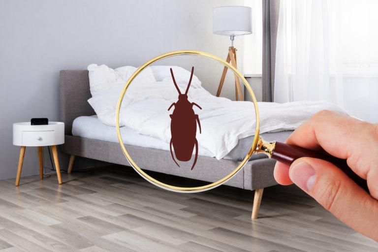 Csótány a lakásban – Mit tehetsz ellene?