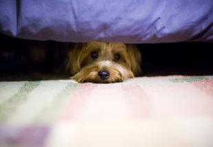 Kutyád fél a vihartól? Így tudod az otthonodat kialakítani, hogy könnyebben viselje