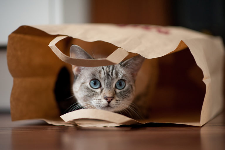10 hely, ahova a cicák szívesen elbújnak otthon