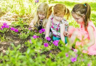 Vegyszermentes praktikák csigák ellen – Így tüntesd el őket a kertedből