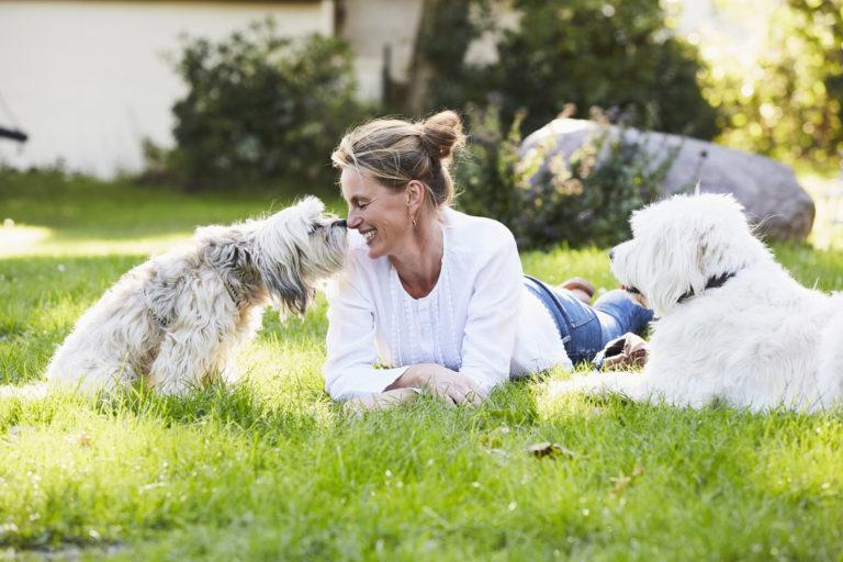 Kutya vizelet a fűben? – Ezt teheted a sárga foltok ellen