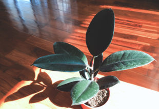 5 rózsaszín növény, ami fantasztikusan mutatna az otthonodban
