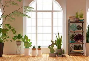 A pihentető alvás jegyében: Az 5 legjobb hálószobai növény