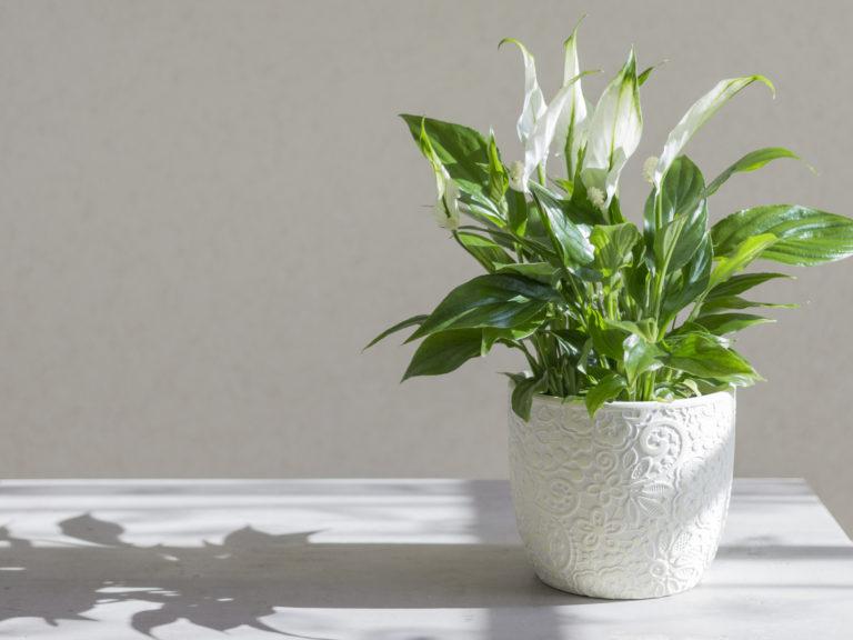 5 növény, amit a fürdőszobába is tehetsz