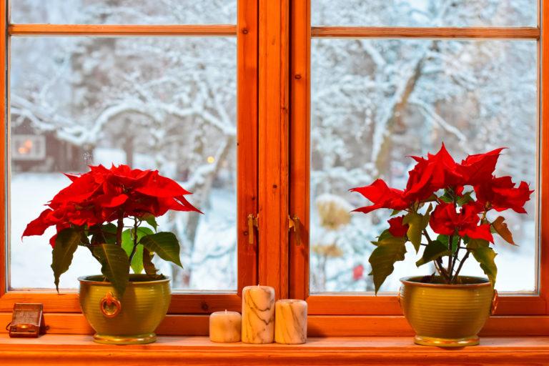 A legszebb téli virágok – Ne maradjon virág nélkül otthonod karácsonykor sem