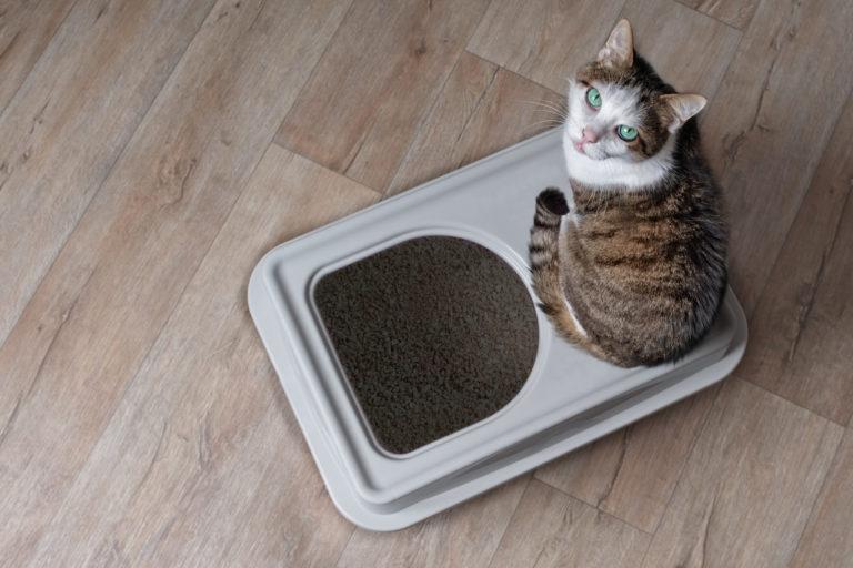 4 kreatív ötlet a macskaalom elrejtésére