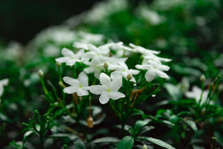 Növények alvásproblémák ellen