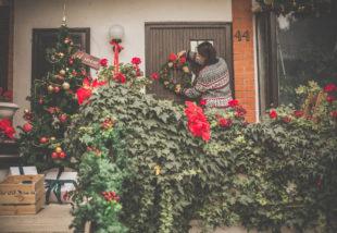 Téli teendők a muskátlival – Így tartsd életben növényedet a hidegben is