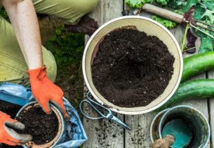 Ezt a 8 növényt TILOS komposzttal trágyázni