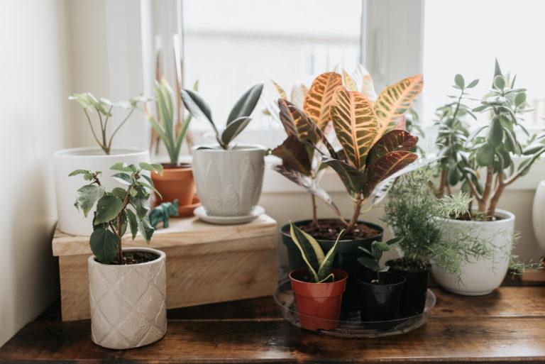 Kaspó kisokos – Milyen növényhez milyen cserép dukál?
