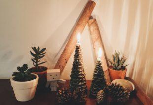 Szukkulens karácsonyfa – Ez 2020 legmenőbb karácsonyi dekorációja