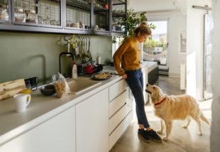 Mindig sáros a lakás a kutyád miatt? 5 tipp, amivel megóvhatod a házat a koszos mancsoktól
