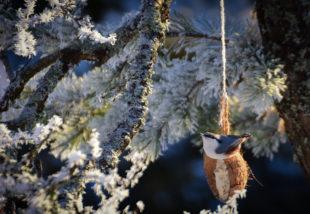 Készíts madáreledelt saját kezűleg – Szuper és hasznos DIY projekt