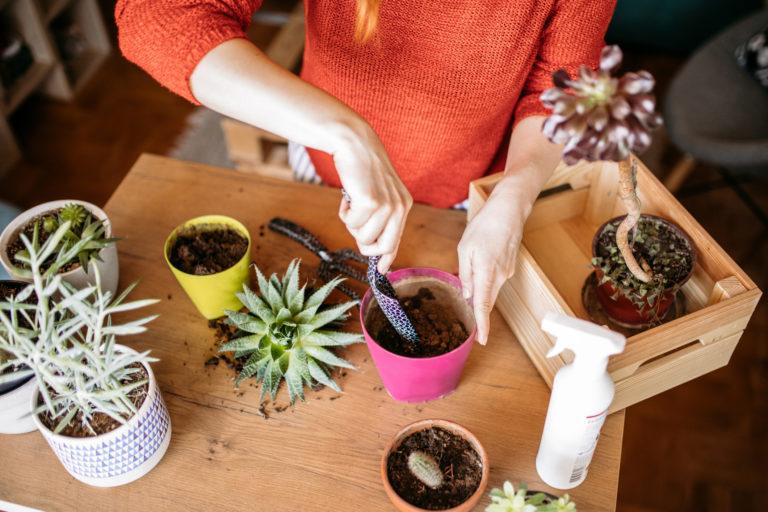 8 jele annak, hogy ideje átültetni a növényeket