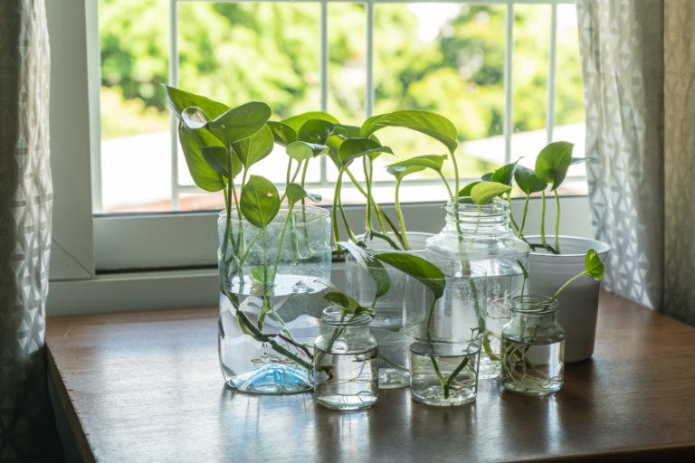 5 könnyen életbe tartható növény az irodába és a home office-ba