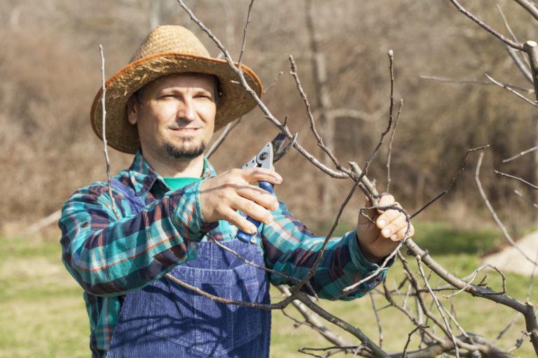 Így zajlik a gyümölcsfák metszése lépésről lépésre