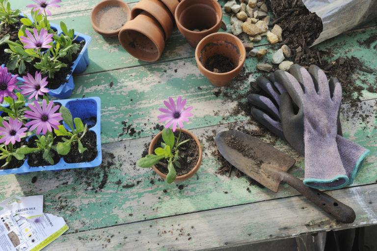 Tavaszi teendők a kertben – Íme a lista mindenről, amit ilyenkor el kell végezni