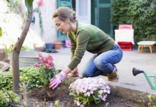 Virágok ültetése tavasszal – Vegyük lépésről lépésre, hogy tökéletes legyen a végeredmény