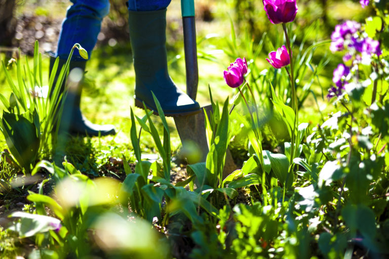 Ezekre figyelj, ha át szeretnéd alakítani a kertet
