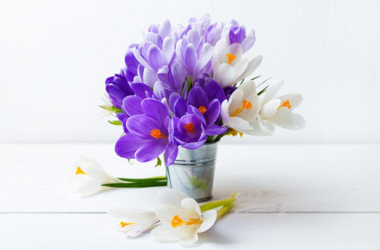 Virágba borult kertek IV. – A krókusz gondozása
