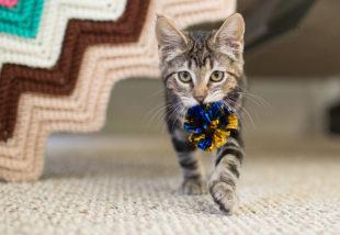 6 szuper csináld magad macskaház ötlet – Cicád imádná valamennyit!