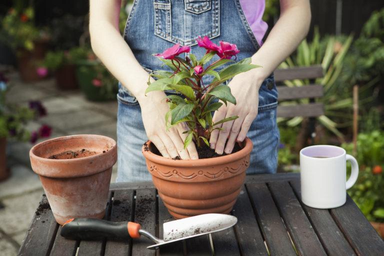 Ültetési kisokos – Így varázsold virágos oázissá az erkélyt