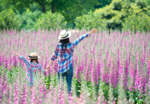 Virágba borult kertek IX. – A gyűszűvirág gondozása