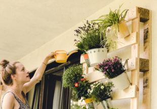 Árnyékos az erkélyed? Akkor ezzel a 6 elbűvölő növénnyel dekoráld