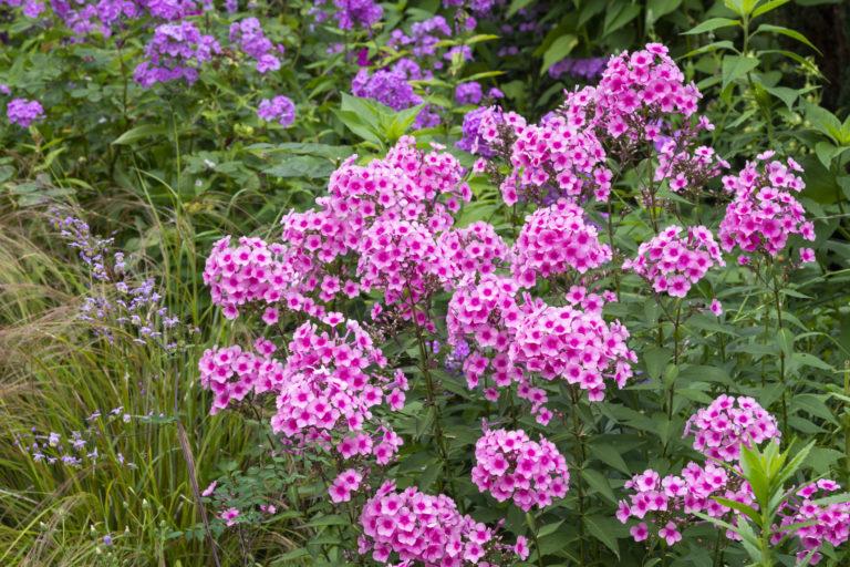 A legszebb évelő kerti virágok, melyek kezdő és profi kertészek udvarából sem hiányozhatnak