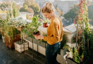 Tűzi a nap az erkélyed? Ezeket a növényeket ültesd oda
