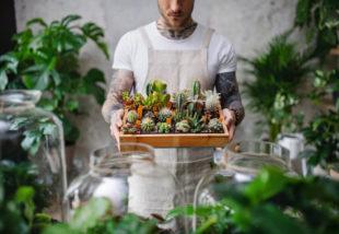 Így ápold a trendi szukkulens növényeket