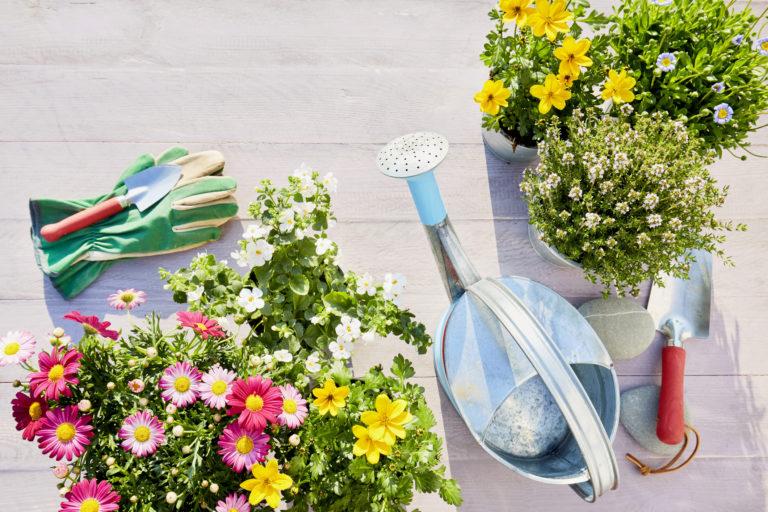 Indul új sorozatunk: Virágba borult kertek