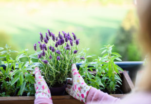 Ezeket a nyáron virágzó növényeket még MOST is elültetheted