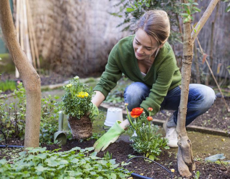 Könnyen gondozható kerti virágok – Ezeket válaszd, ha nem szeretsz sokat bajlódni a növényekkel